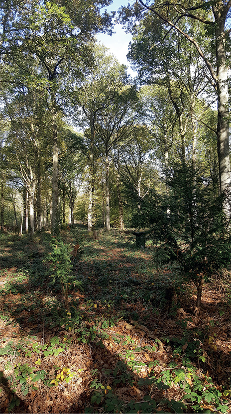 wild camping woodland kent for up to two people